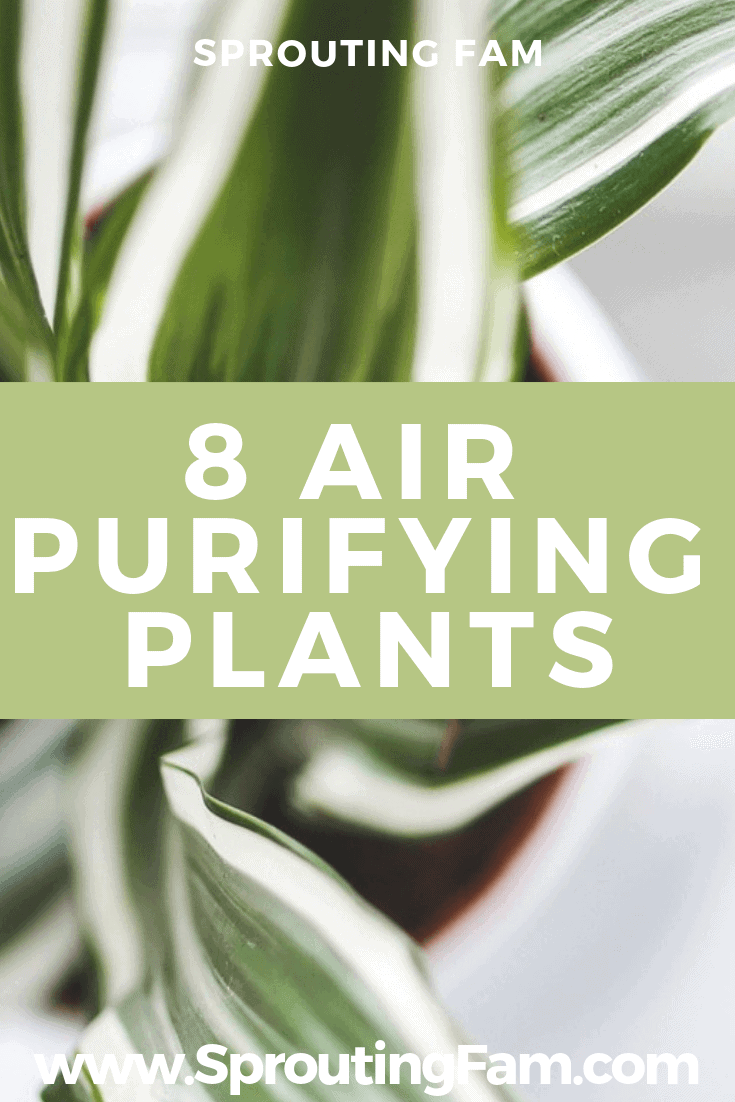free air purification