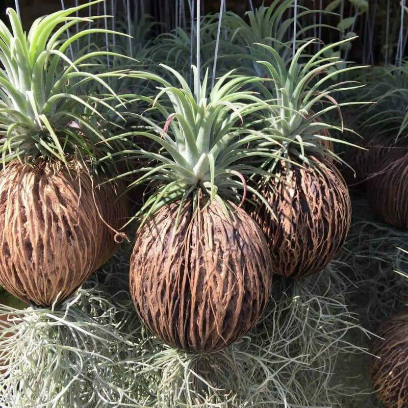 hanging basket plants planter
