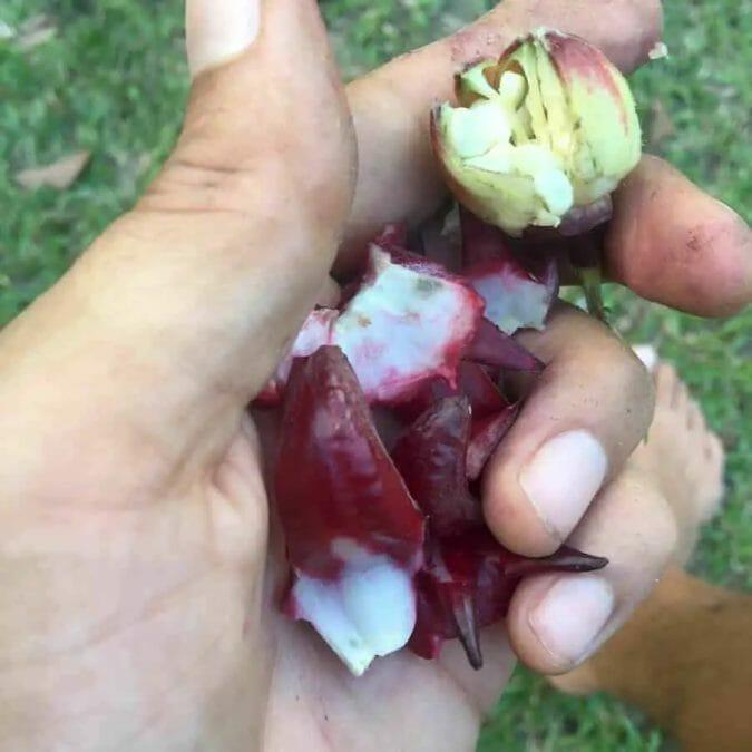rosella flower recipe