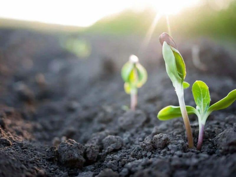 dirt to soil living soil