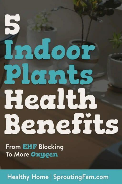 indoor plants health benefits