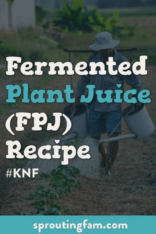 fermented plant juice recipe