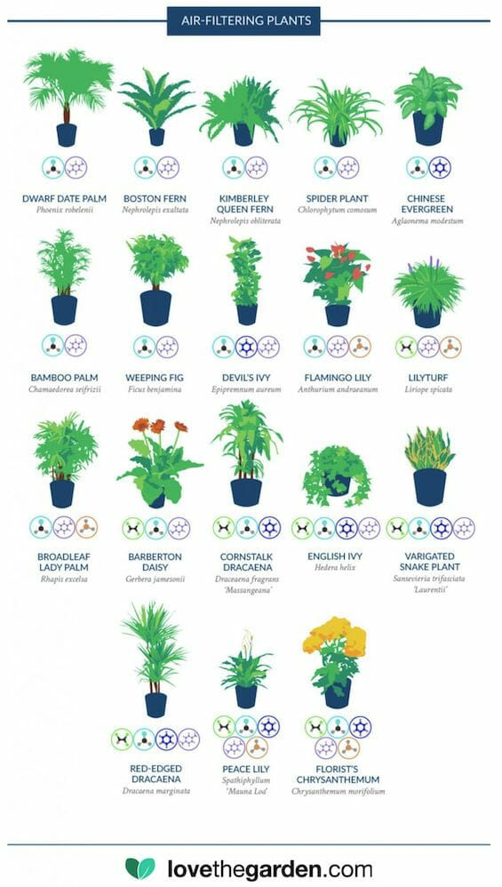 air filtering house plants