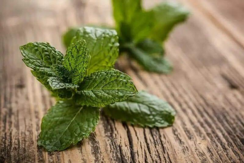 fresh mint herb leaves